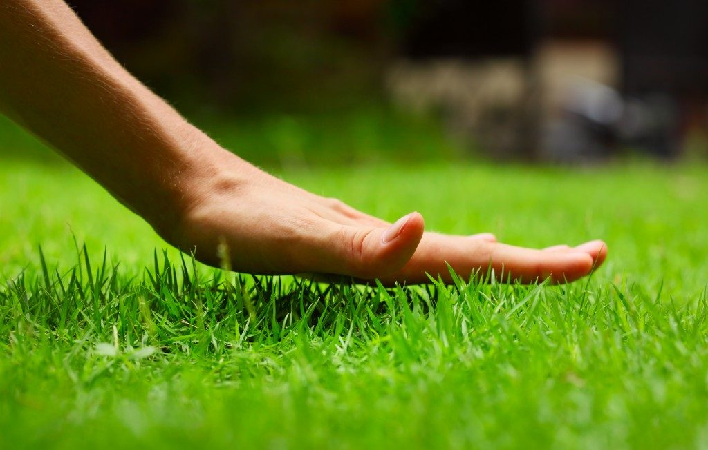 Hand feeling the grass in the lawn